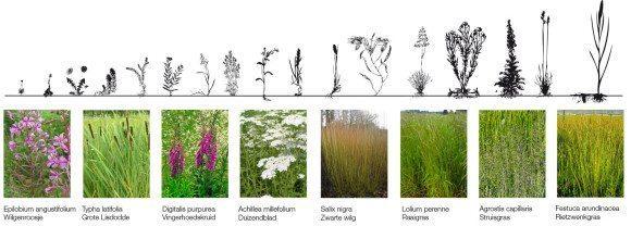 4-Delva-landscape-architects-steven-biomassa-park-energielandschap-amsterdam-noord-antwerpen-Ceuvel-broedplaats-noordwaards-woonboot-spaceandmatter-pieter-theuws